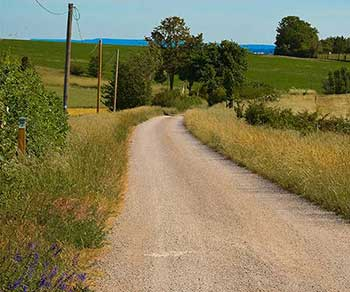 country road, grass, electric and phone lines